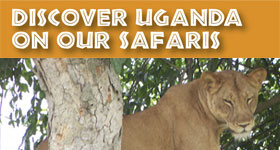 Ugandan Tours & Safaris