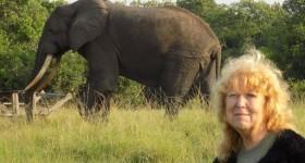 Ann Elephant